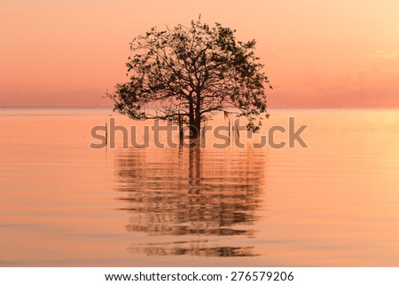 Silhouette and reflection of single tree at sunset - stock photo