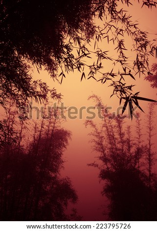 silhouette bamboo forest as dusk. - stock photo