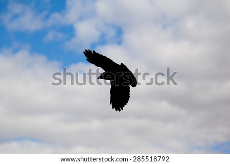 silhouette bird with cloudy sky - stock photo
