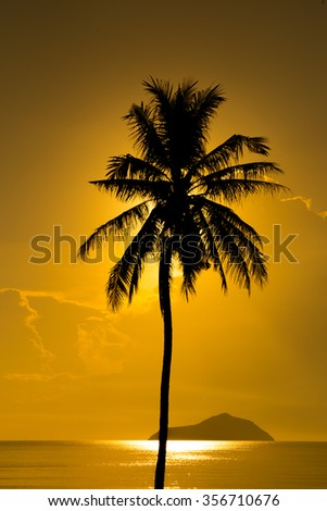 Silhouette Coconut Palm Tree