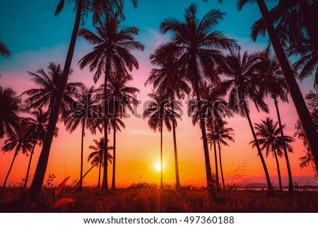 Silhouette Coconut Palm Trees On Beach At Sunset Vintage Tone
