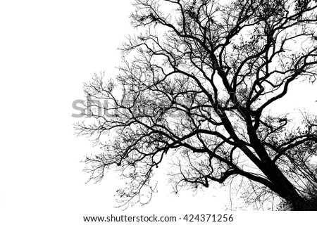 Silhouette dead wood branches black and white - stock photo