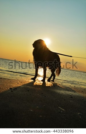 silhouette dog on the sea, sky during sunset