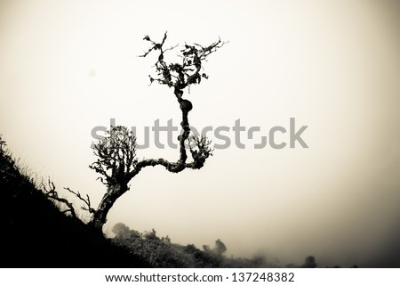 silhouette dry tree on hill - Lonely dead tree - dead dry tree - Dead trees Dried. Branches of dead trees and dry under the sun. - stock photo