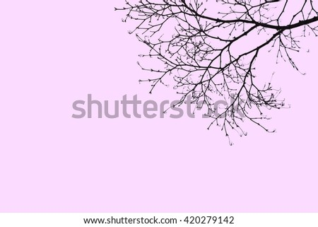 silhouette dry tree on pink baclground - stock photo