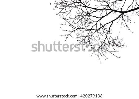 silhouette dry tree on white baclground - stock photo