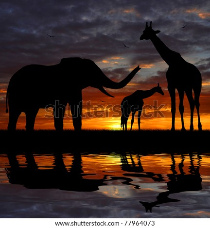 silhouette elephant and giraffes in the sunset - stock photo