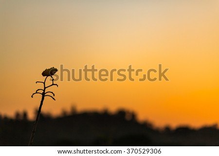 silhouette flower and sunset - stock photo