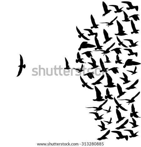 Silhouette Group Flying Seagull Birds One Stock Photo ...