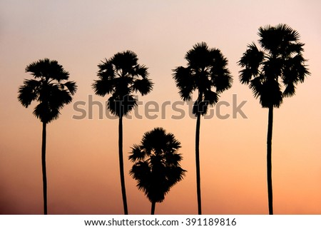 Silhouette image of Toddy palm trees against sunset background - stock photo