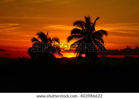 Silhouette image view on sunset:Close up,select focus with shallow depth of field:ideal use for background.