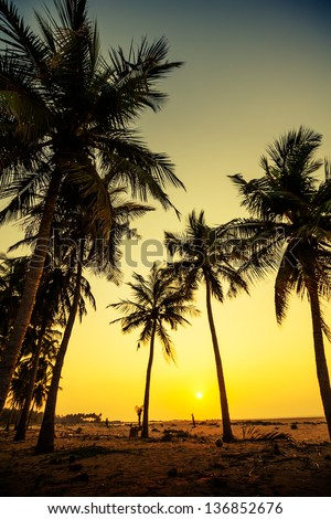 Silhouette od palm trees at the seashore in Sri Lanka - stock photo