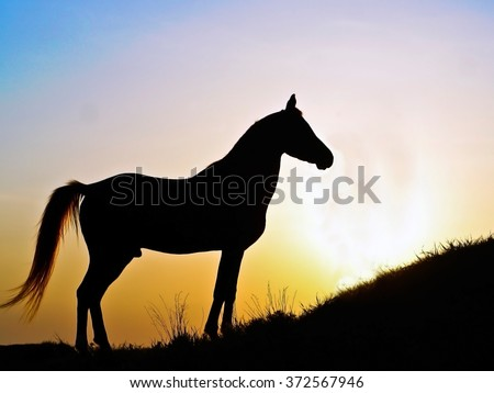 Silhouette of a a stallion on the background of sunset