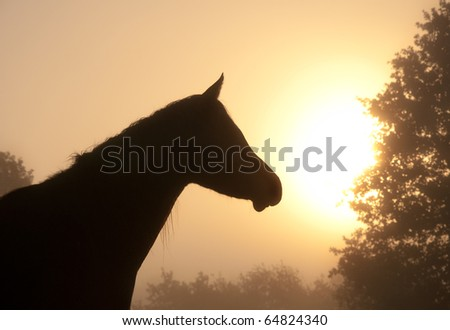 Silhouette of a beautiful Arabian horse head against fog and early morning sun, in rich sepia tone