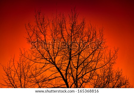 Silhouette of a big tree against sunset.