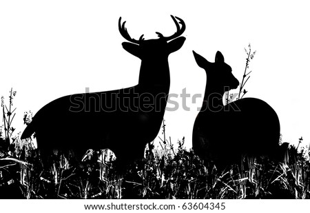 Silhouette of a Buck and Doe Deer in a Grassy Meadow - stock photo