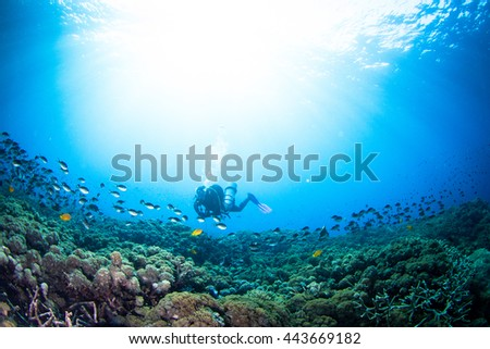 Silhouette of a diver above the healthy shallow reef. Nusa Penida, Indonesia. - stock photo