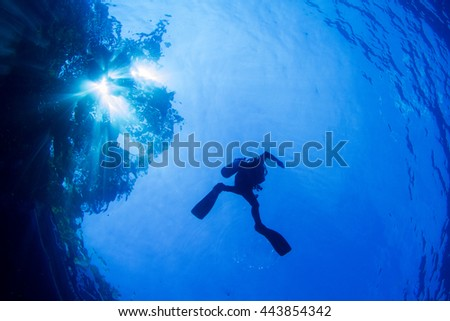 Silhouette of a diver against the light from the surface, with a reflection of the trees and sky. Crystal clear water of Indonesia. - stock photo