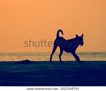 silhouette of a dog at sunset.