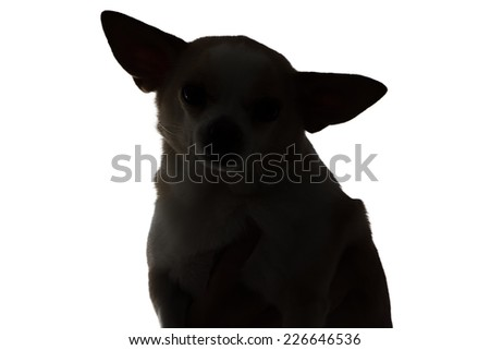 Silhouette of a dog chihuahua on white background - stock photo