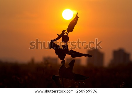 Silhouette of a flower in a dancer pose in sunset, with bright orange sky.