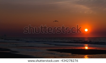silhouette of a flying bird on the background of the dawn sky and golden sun, Atlantic ocean,Ocean city,New Jersey,spring