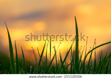 silhouette of a green grass on  background the sky at sunrise - stock photo