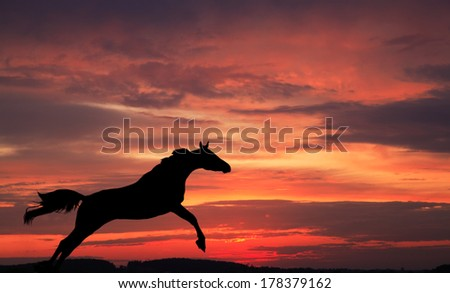 Silhouette of a horse in a jump against the sky on a sunset - stock photo