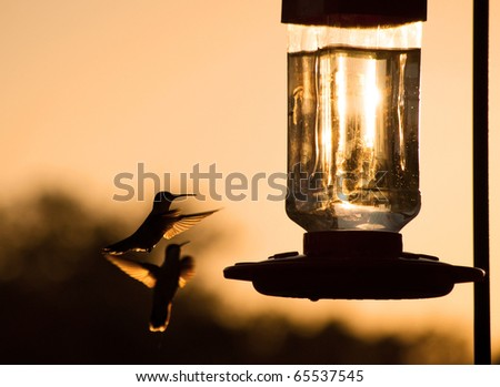Silhouette of a Hummingbird hovering, getting ready to feed at feeder at sunset, in sepia tone - stock photo