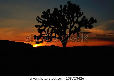 SIlhouette of a Joshua Tree at sunset, in Joshua Tree National Park, USA - stock photo