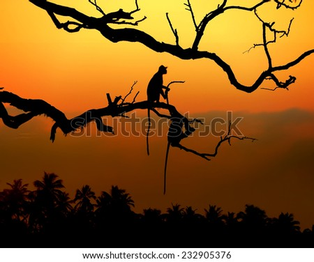 Silhouette of a monkey in sunset with palm - stock photo