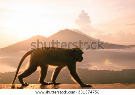 Silhouette of a monkey in the mountains at dawn. The symbol of the new year 2016 - Fire monkeys. stock image. - stock photo