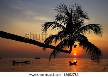 Silhouette of a palm tree on a sunset.