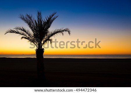 Silhouette of a palm tree on the beach at sunset in Valencia in Spain