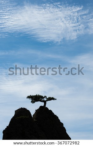silhouette of a pine on a background of mountains. The tree grow - stock photo
