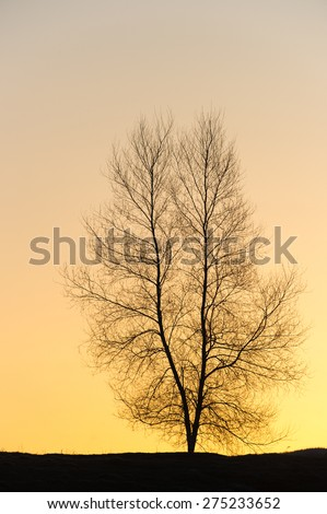 Silhouette of a single barren tree at sunset, Stowe, VT, USA. - stock photo