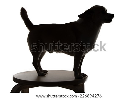 Silhouette of a small dog chihuahua in profile on white background - stock photo