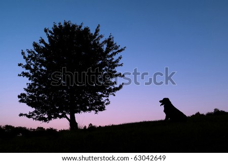 Silhouette of a tree and a dog in nature