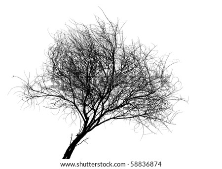 silhouette of a tree on a white - stock photo