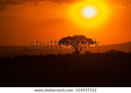 Silhouette of African acacia tree in the last daylight