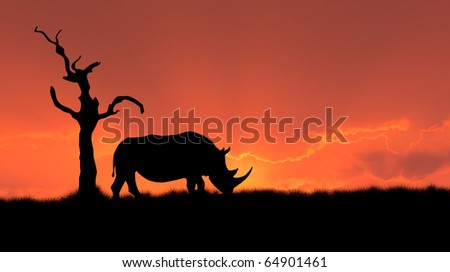 silhouette of african white rhinoceros against orange dusk dawn sky, tree - stock photo