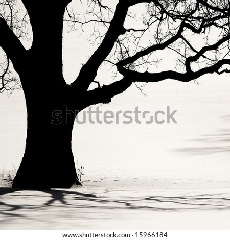 Silhouette of an old tree in the winter and shadows on a snow - stock photo