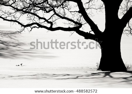 Silhouette of an old tree in the winter and shadows on a snow