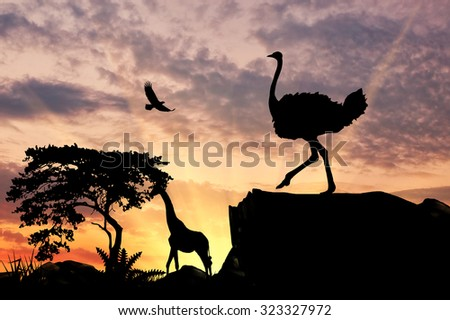 Silhouette of an ostrich on a hill at sunset savanna and animals - stock photo