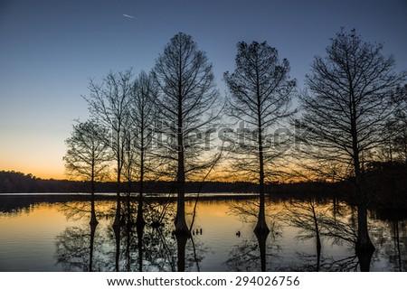 Silhouette of Bald Cypress trees, Stumpy Lake, Virginia Beach, Virginia.  - stock photo