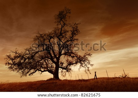 Silhouette of bare oak tree in Winter, sunset, San Joaquin Valley, California.. - stock photo