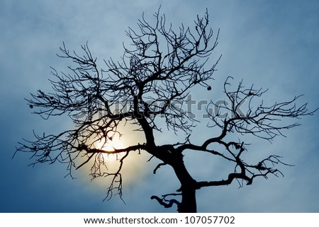 silhouette of bare tree on cloudy sky - stock photo