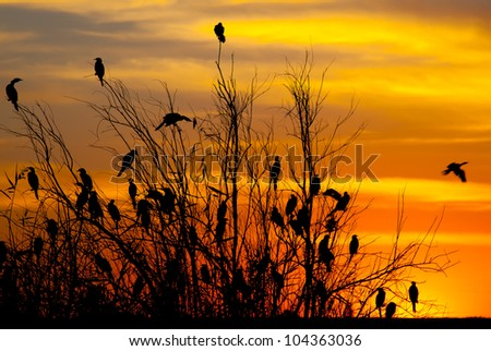 Silhouette of birds at sunset at a dam in South Africa