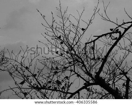 Silhouette of birds in a tree branch.