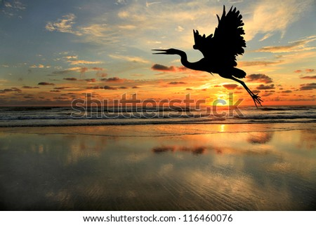 Silhouette of Blue Heron at the Beach at Sunrise - stock photo